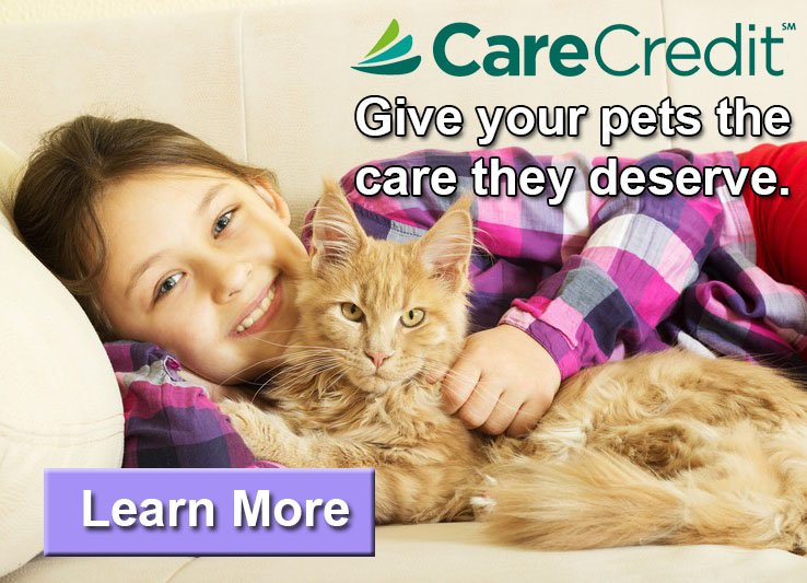 carecredit_cat