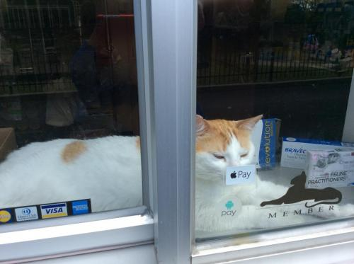 Our pharmacy features cat-friend medications, including flavored products, liquids, transdermal, and a full range of therapeutic nutrition options. Charolotte loves the afternoon sun in our pick-up window and the view of the play ground. She watches for the children every afternoon.